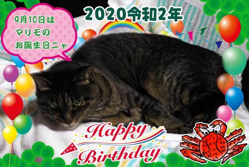 2020-09-10-Thu-01-マリモちゃんお誕生日令和2年_DSCN9258