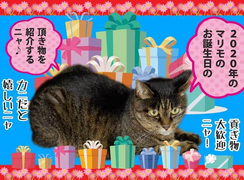 2020-09-10-Thu-b01-マリモちゃんのお誕生日の頂き物紹介_1216751