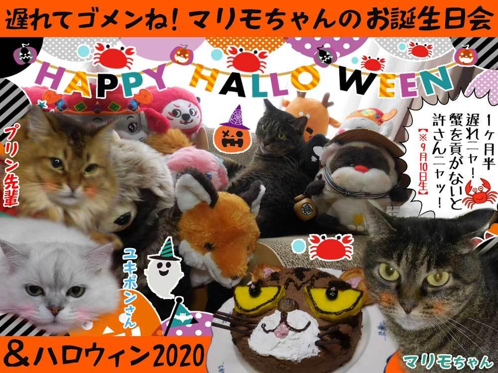 2020-10-31-Sat-01-マリモちゃんお誕生日&ハロウィンパーティー2020