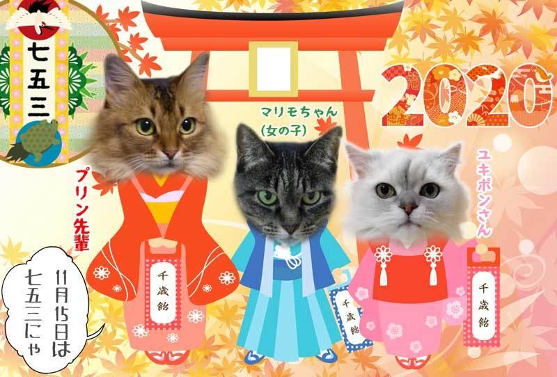 2020-11-15-Sun-01-令和二年七五三_559452