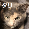 TOPダリ