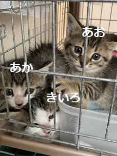 きじ~ズ_集合1