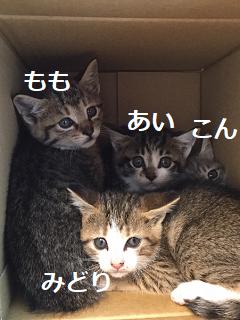 きじ~ズ_集合4