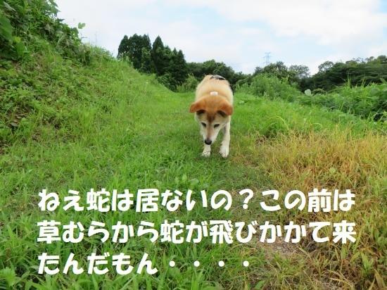 IMG_2016_convert_20200718111047.jpg