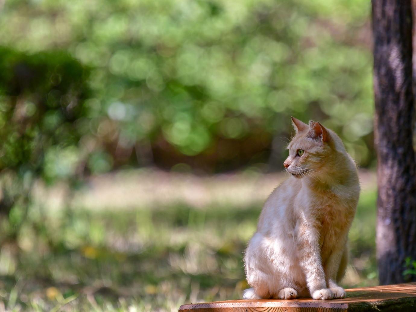 7猫相模川D50_2992_edited