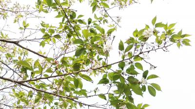 moblog_ea449160.jpg