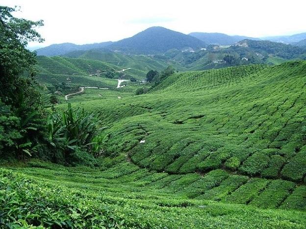 2004茶