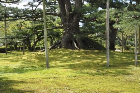 ぴーきちハーレーブログ 福井金沢ツーリング 兼六園 根上松