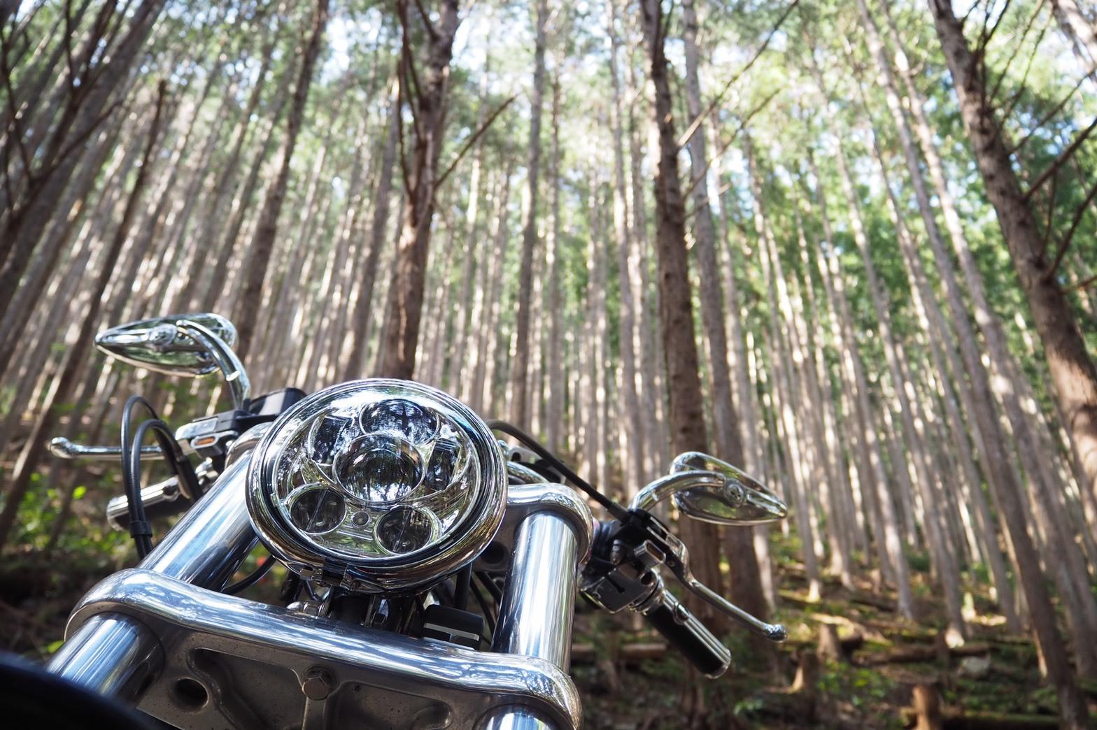 ぴーきち&ダイナ 紀伊半島ツーリング 和歌山県 おくとろ公園キャンプ場 杉林