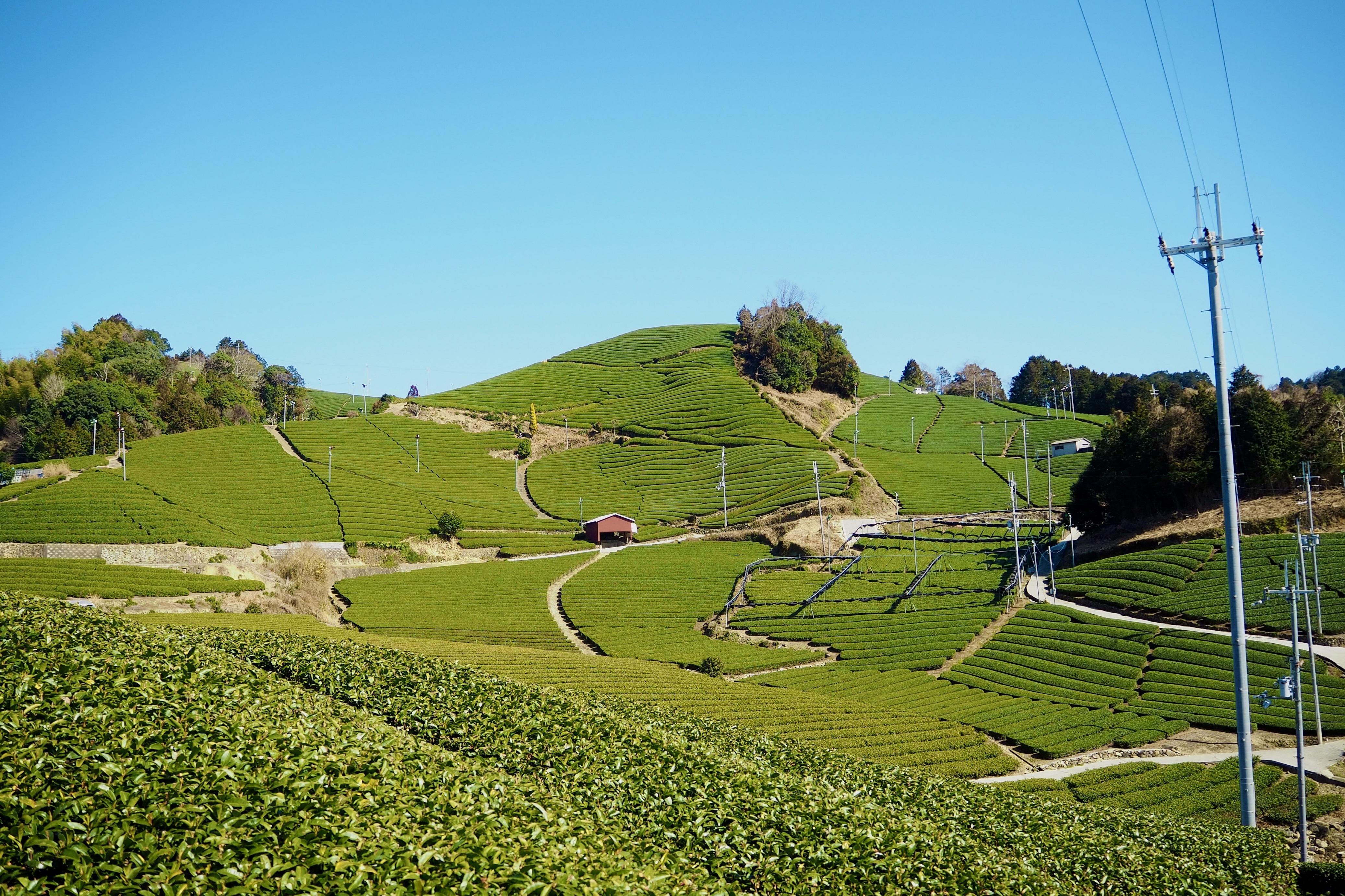 ぴーきち&ダイナ 京都府和束町 茶畑ツーリング 石寺の茶畑 メイン画像