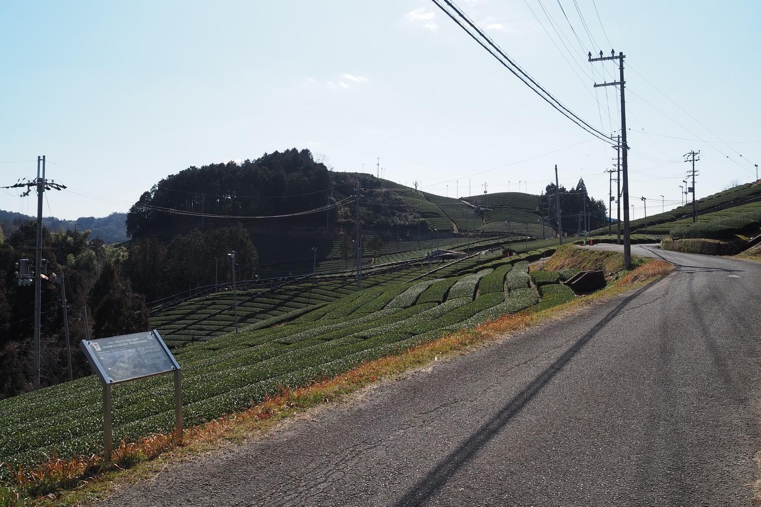 ぴーきち&ダイナ 京都府和束町 茶畑ツーリング 撰原の茶畑 全景