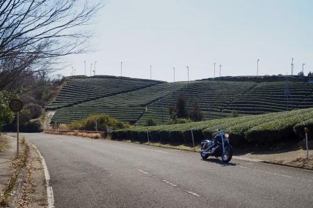 ぴーきち&ダイナ 京都府和束町 茶畑ツーリング