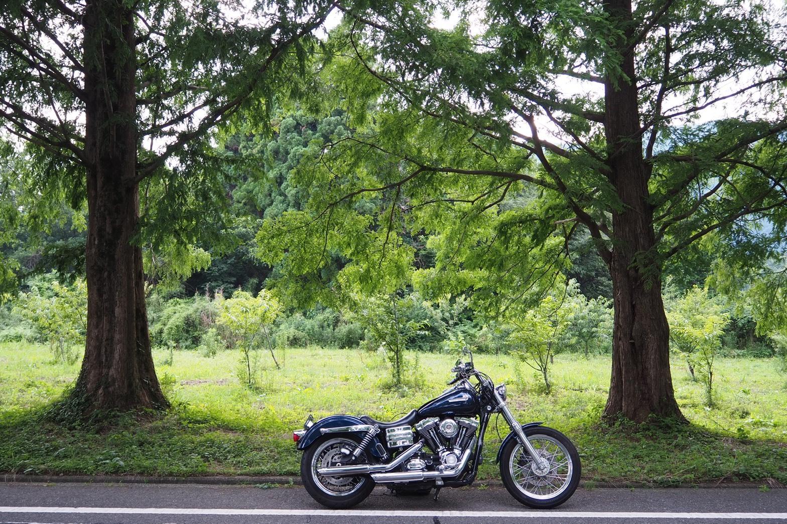 ぴーきちハーレーブログ ビワイチ ヨゴイチツーリング メタセコイア並木 絶景