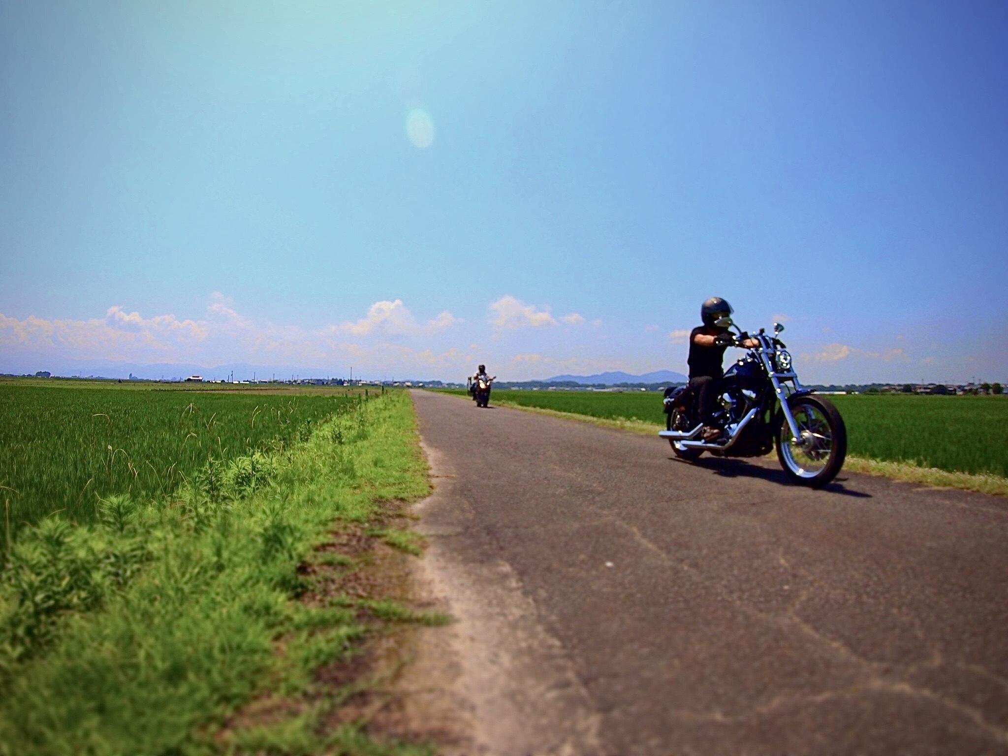 ぴーきちハーレーブログ ビワイチ ヨゴイチツーリング 近江八幡の田んぼ 近江米