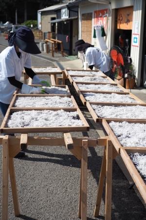 ぴーきちグルメブログ 和歌の浦 やぶ新 究極のしらす丼 直売所 作業風景