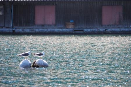 ぴーきち&ダイナ ハーレーブログ 京都丹後半島ツーリンング 伊根の舟屋 ウミネコ