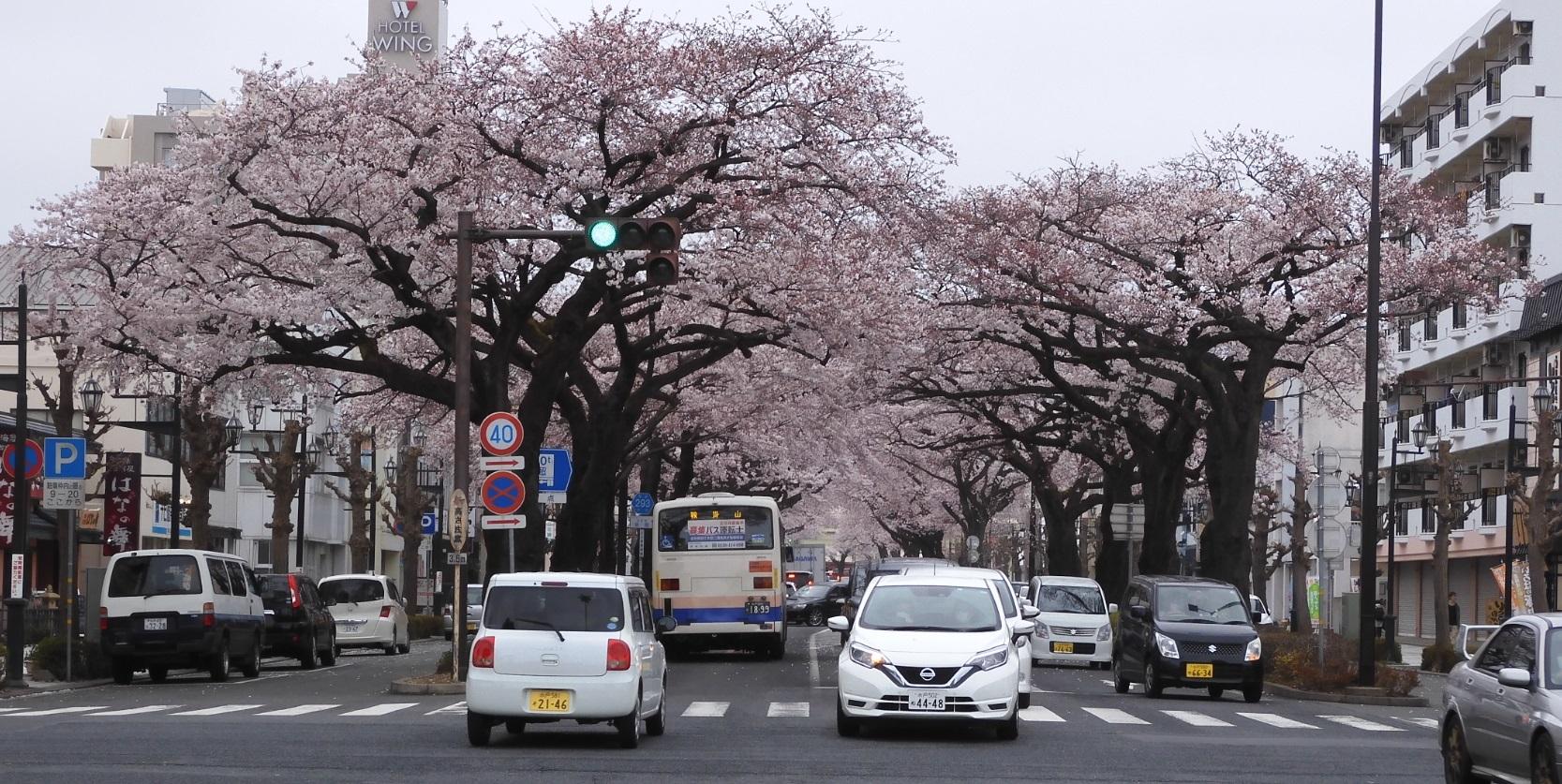 日立駅前の桜2020_1