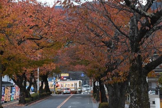 2020年11月7日撮影 飯田線 宮木の桜並木と202M 213系