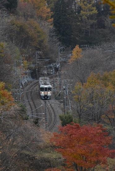 2020ネか11月7日撮影 中央西線 1831M 313系と紅葉したカエデの木