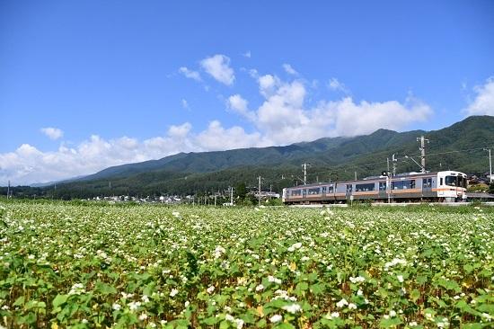 2020年7月19日撮影 飯田線は313系と蕎麦の花