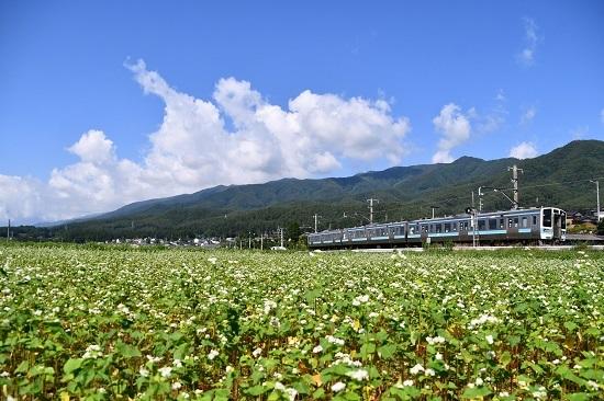 2020年7月19日撮影 飯田線 210M 蕎麦の花と 1