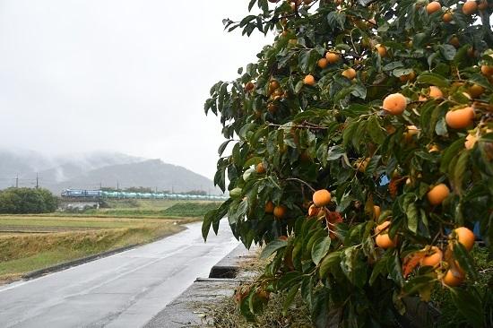 2020年10月17日撮影 東線貨物2080レ EH200-21号機と柿の木 暈し
