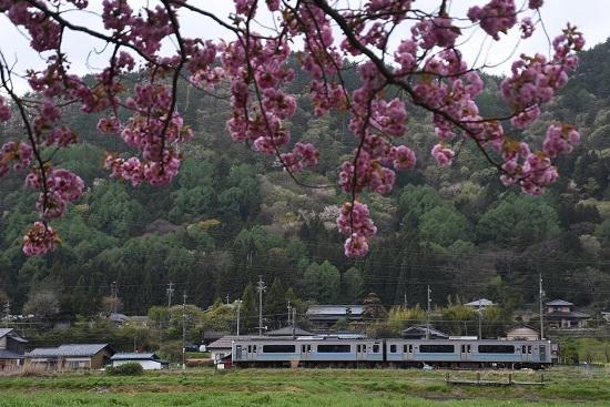 2020年5月6日撮影 辰野線 158M E127系と八重桜