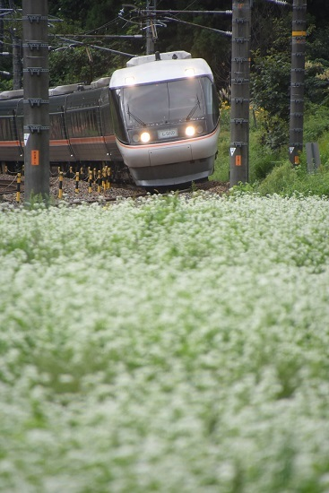 2020年9月6日撮影 1001M 383系「WVしなの1号」と蕎麦の花