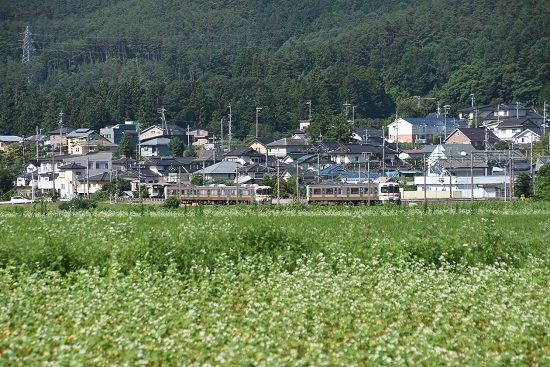 2020年7月19日撮影 飯田線は313系と313系1700番台の交換と蕎麦の花