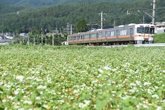 2020年7月19日撮影 飯田線は213M 313系1700番台と蕎麦の花