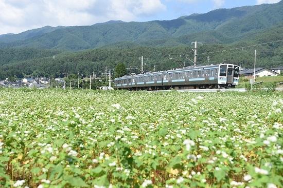 2020年7月19日撮影 飯田線 210M 蕎麦の花と 2
