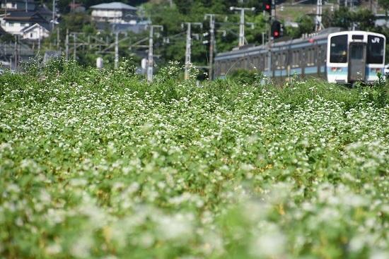 2020年7月19日撮影 飯田線 210M 蕎麦の花と 3