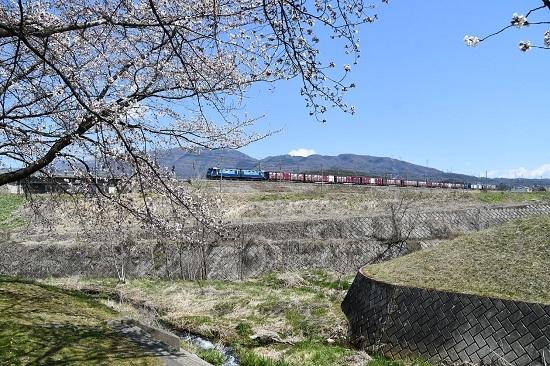 2020年4月11日撮影 東線貨物2083レ みどり湖にて桜と絡めて