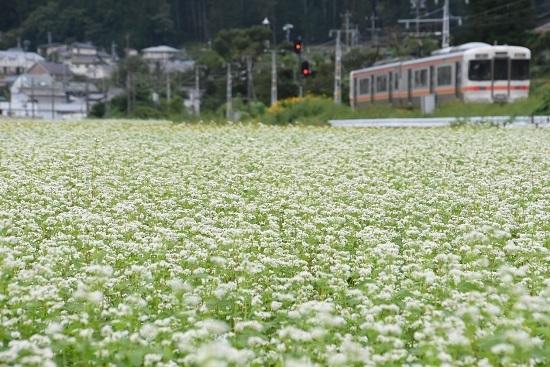 2020年9月13日撮影 飯田線は伊那新町の蕎麦の花と313系 回送