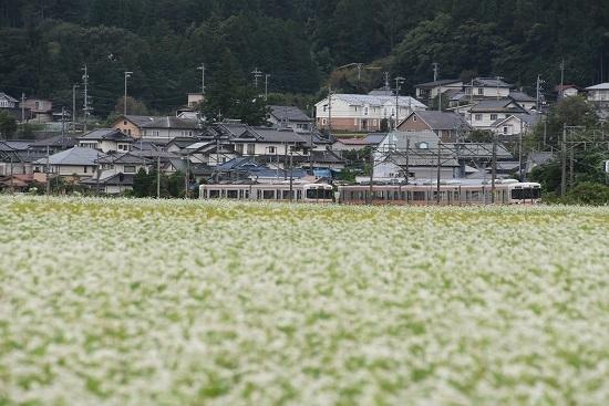 2020年9月13日撮影 飯田線は伊那新町の蕎麦の花と313系同士の並び