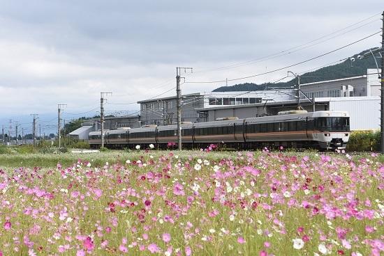 2020年9月19日撮影 中央西線 383系 1008M WVしなの8号と秋桜
