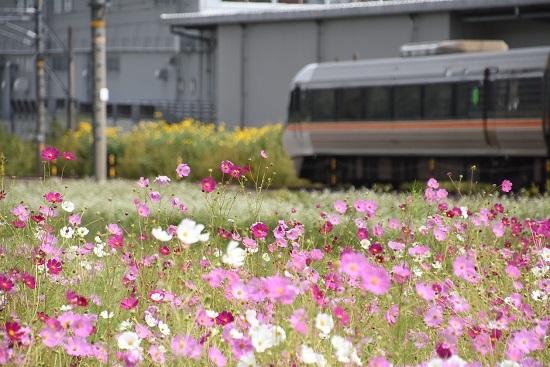 2020年9月19日撮影 中央西線 383系 WVしなのと秋桜