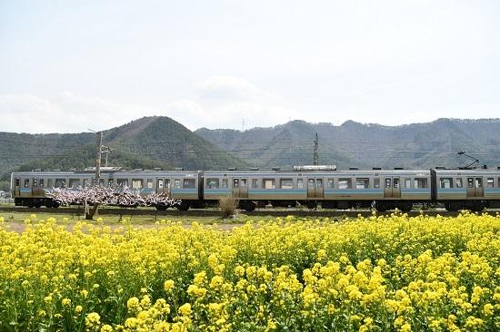 2020年4月26日撮影 中央西線829M 211系 菜の花と桃の花