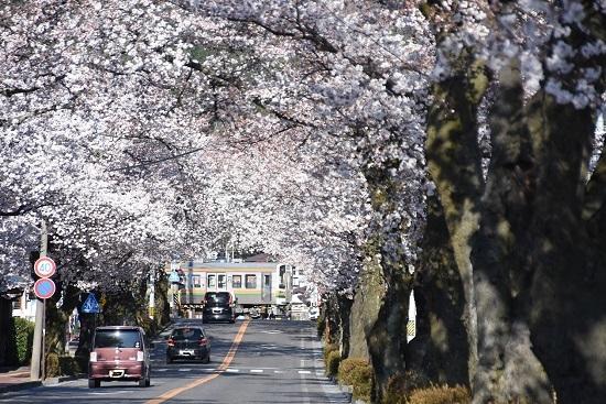 2020年4月11日撮影 飯田線は宮木の桜並木と206M 213系