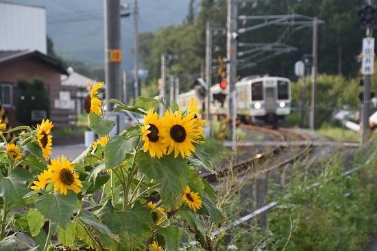 2020年8月10日撮影 飯田線は羽場駅に進入する2220M 211系「快速 みすず」