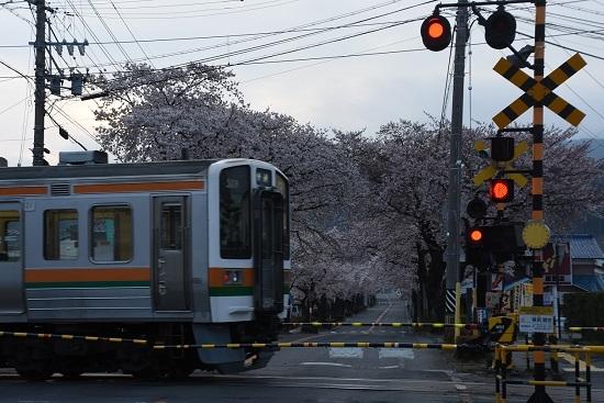 2020年4月12日撮影 2201M 213系の青文字「快速」と桜並木