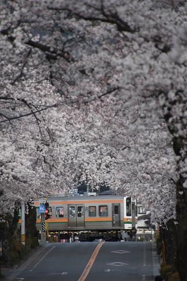 2020年4月12日撮影 202M回送 213系と桜並木