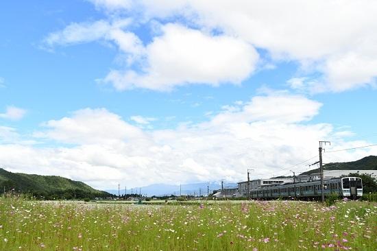2020年9月6日撮影 中央西線にて 829M 211系と蕎麦と秋桜の花