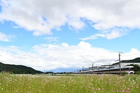 2020年9月6日撮影 中央西線にて 1007M 383系「WVしなの7号」と蕎麦と秋桜の花
