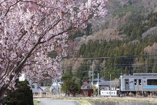 2020年4月12日撮影 156M E127系と桜を絡めて