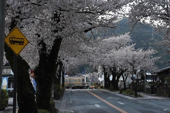2020年4月19日撮影 2201M 213系と桜並木