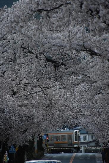 2020年4月19日撮影 202M 213系と桜並木