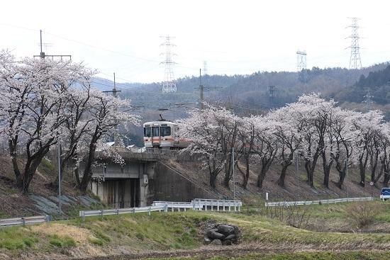 2020年4月19日撮影 みどり湖にて桜並木から顔を出す313系
