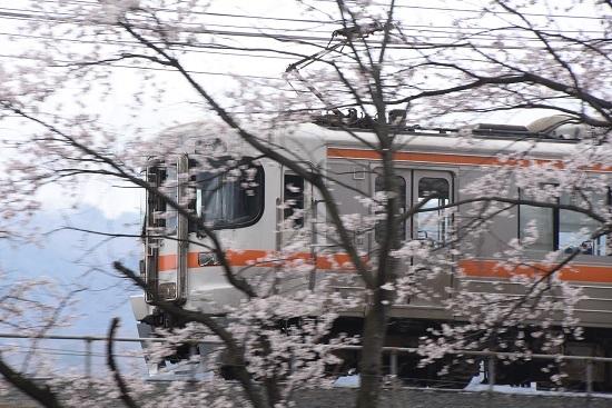 2020年4月19日撮影 みどり湖にて桜の中を行く313系