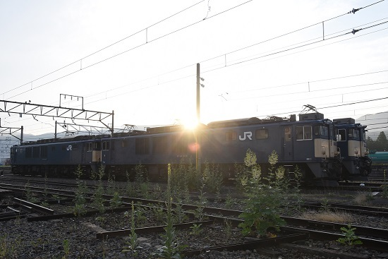 DSC_7594-1.jpg